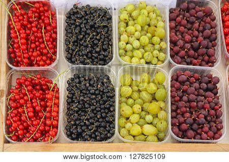 Fresh Berry Fruits Mix in Plastic Trays