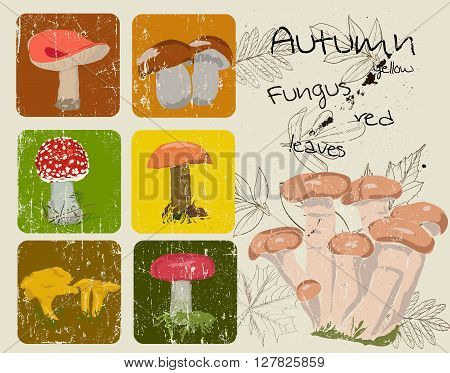 Vintage poster with autumn plants and fungus. Vector illustration EPS8