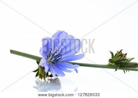 A common routes wait, a blue blossom.