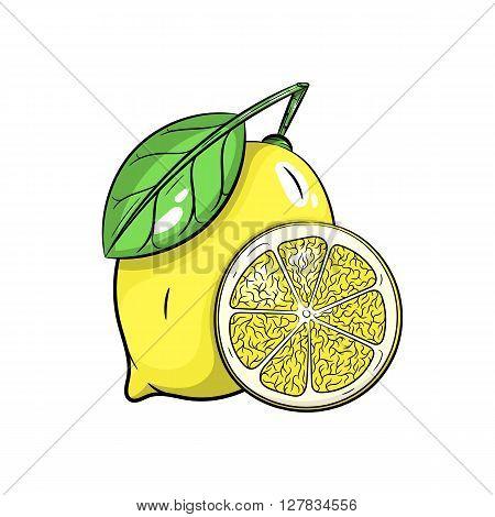 Vector lemon illustration. Slice of lemon, lemon isolated on white background. Vector sketch hand drawn fruit - stock vector