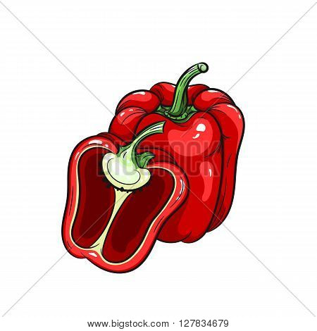 Vector bell pepper illustration. Pepper half, bell pepper isolated on white background. Vector sketch hand drawn - stock vector