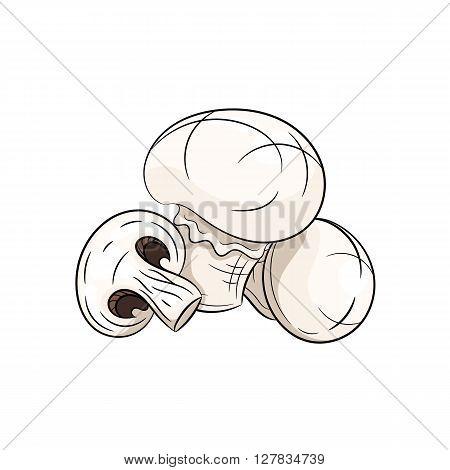 Vector champignon illustration. Champignon isolated on white background. Vector sketch hand drawn - stock vector