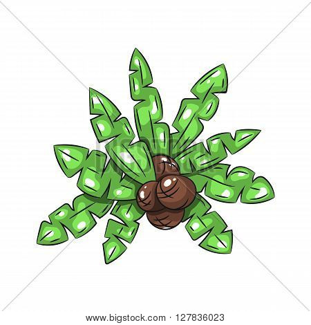 Palm leaves with coconuts on a white background. Hand draw illustration - stock vector