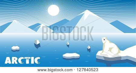 On the image is presented Polar bear on an ice flow, polar landscape.