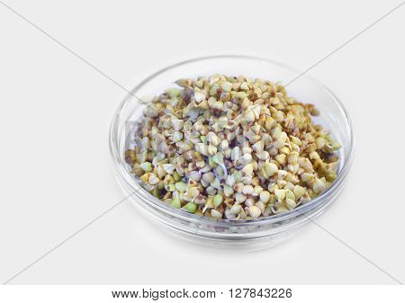 Germinated buckwheat in a glass jar on a white background