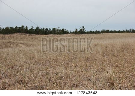 Dune and dune grass in Sleeping Bear Dunes National Lakeshore, Michigan