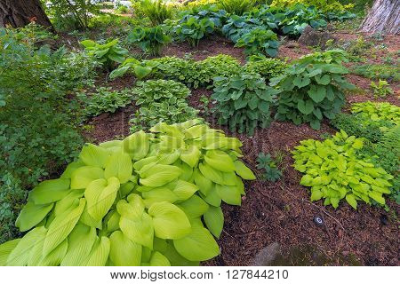 Hostas Variety in garden landscaping during spring season