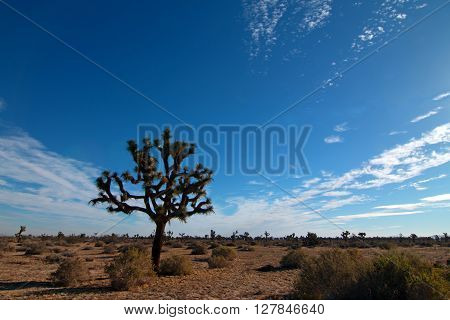 Joshua Tree cloudscape in Southern California high desert USA
