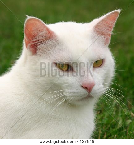 White Cat Mad