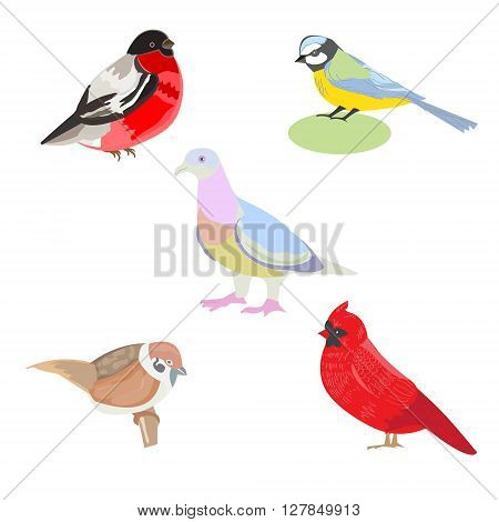 Vector illustration of a set of images of birds illustration birds - titmouse red cardinal Sparrow pigeon bullfinch card design flyers leaflets postcards
