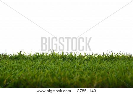 Green grass meadow field isolated on white background