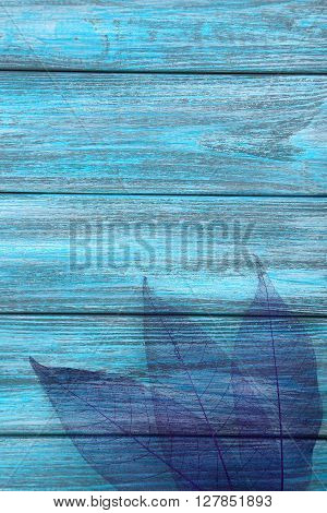 Skeleton leafs on blue wooden background, close up