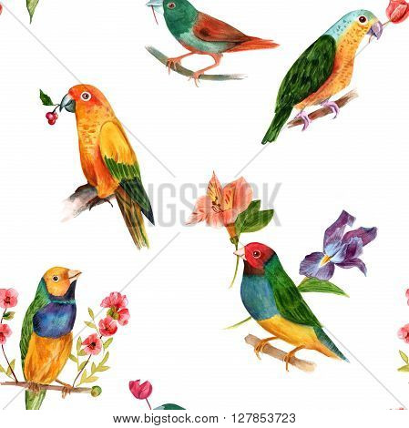 A seamless background pattern with different watercolor birds (finches and parrots) hand painted in watercolor in the style of classic botanical art