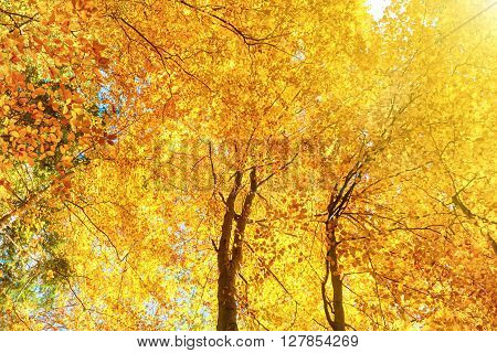 Orange Trees With Red Leaves