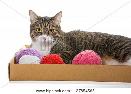 Big grey cat in a cardboard box with balls of wool