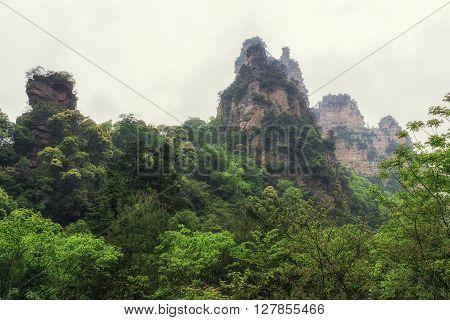 Tall Mountain Peaks Of Yangjiajie