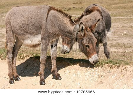 Donkeys Grazing Along A Sand Track