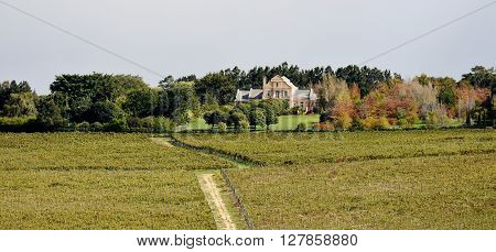 Landscape with Wine Farm and Trees in autumn colors