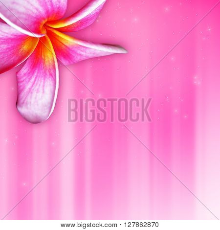 plumeria tropical flower on pink background with hotspots