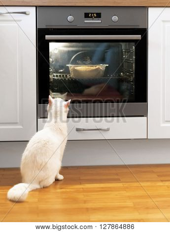 White Cat Is Watching Food In The Oven.