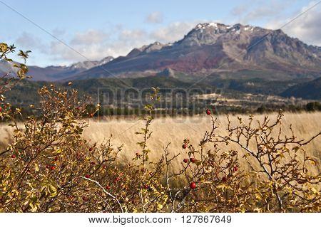 Autumn Colors In El Boliche, Bariloche, Patagonia, Argentina