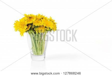 Dandelion bouqet in glass isolated on white background as a natural summer decoration.