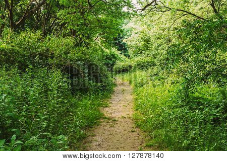 Empty Lane, Path, Pathway In Summer Deciduous Forest Trees.