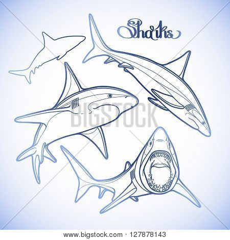 Graphic collection of vector sharks drawn in line art style. Oceanic whitetip shark in blue colors.  Coloring book page design