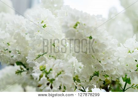 Lilac blooming tree with white blooming flowers