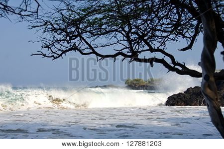 Watching Surf Under Trees Of Puako Beach