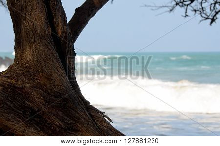 Serene Trees At North End Of Puako Beach - 2