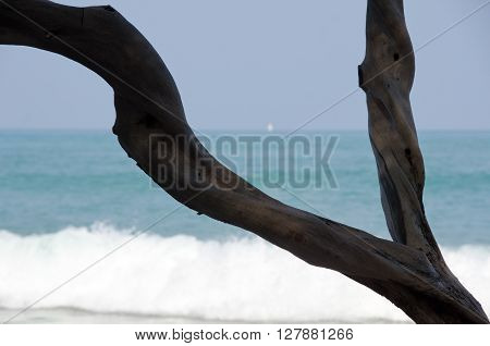 Dry Wood Branch Framing Puako Beach