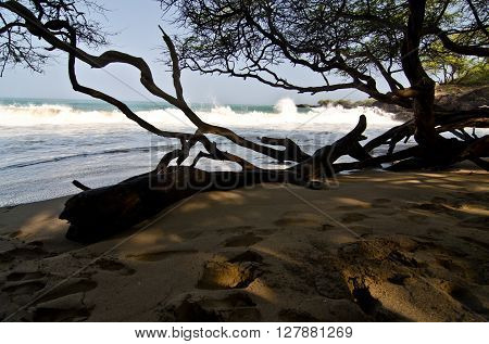 In Wet Woods Of Puako Beach -2