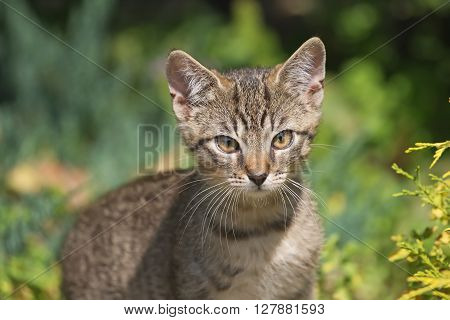 Close-up view of a gray striped kitten in outdoors