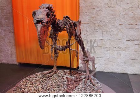 PERM RUSSIA - APR 4 2015: Skeleton of small dinosaur in Museum of Local History