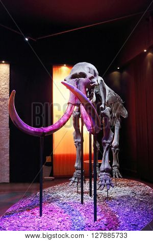 PERM RUSSIA - APR 4 2015: Skeleton of mammoth with tusks in Museum of Local History