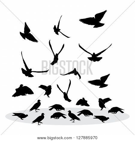 Flock of feeding pigeons. Vector silhouette for your design.