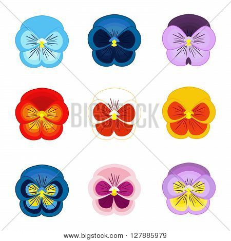 Set of pansy flower vector isolated on white background