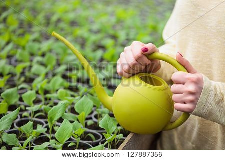 Hands Of Farmer Woman Watering Green Seedlings In Greenhouse