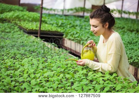 Young Farmer Girl Watering Green Seedlings In Greenhouse