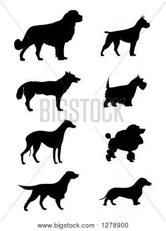 Silhueta de cães