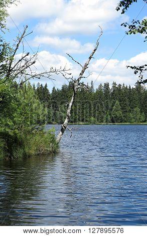 Pond in the Natural Preserve Kladska peats, Czech republic
