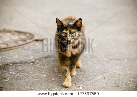 Beautiful multicolor scared cat walking at the street and looking at camera