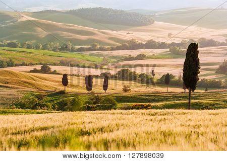 Tuscan Cypress Hills Summer Landscape, Warm Sunset Light