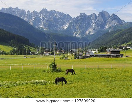 Idyllic summer landscape in the Alps with horses grazing on fresh green mountain pastures and snow capped mountain tops in the background Bavaria Germany