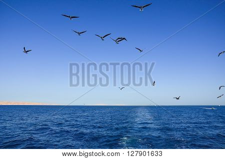seagulls in flight over blue by sea