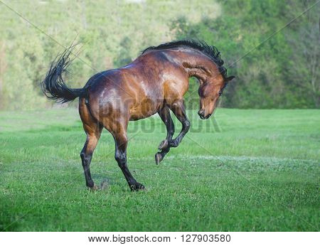 the brown horse play on the green grass