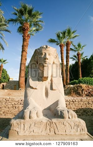 landmark front sculpture of sphinx statue face human-headed with pharaoh Nekhtanebo in avenue monument between Luxor and Karnak temples in Thebes ancient city Egypt Africa