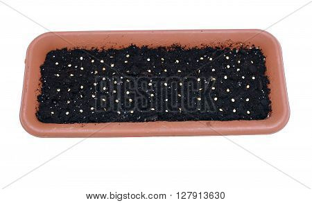 Sowing seeds in the soil in the flower box at early spring isolated on white background