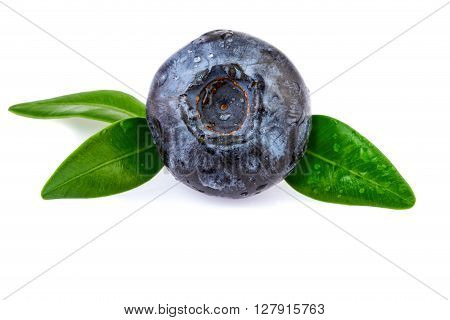 One Blueberry in close-up, isolted on white background
